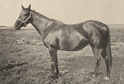 "Miss Darebin. ""A more notable collection of mares than which [Daly] has gathered at Bitter Root has seldom, if ever, been seen in the United States,"" wrote turf writer Horace Lyman Weeks in 1898."