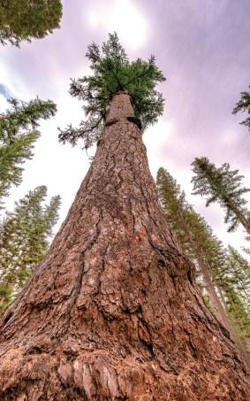 Be A Tree Hugger | Photo by John Mercer