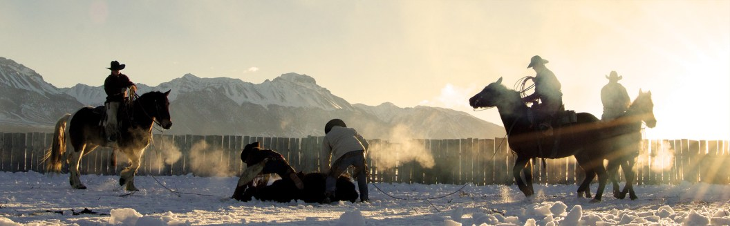 The Lost River Range looms as Mason McAfee and Tayler Teichert pin a calf for branding.