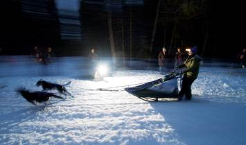 Short days and long nights mean an after-dark start for excited sled dogs at the Race to the Sky.