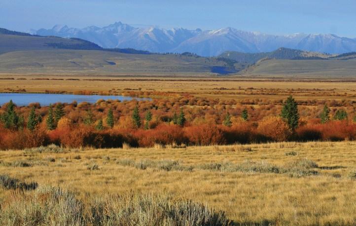 Fall color in Centennial Valley. Photography courtesy Taft-Nicholson Center