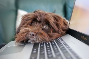 dog on laptop keyboard