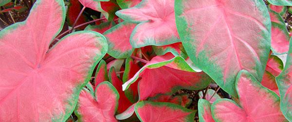Red Flowers Succulent Plants