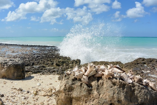 Conch Shells and Waves in Aruba