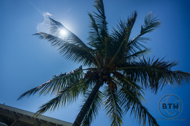 A palm tree silhouetted in front of the sun at the Doubletree Resort in Puntarenas, Costa Rica | BIG tiny World Travel