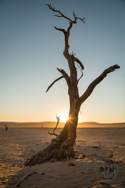 dead-tree-1