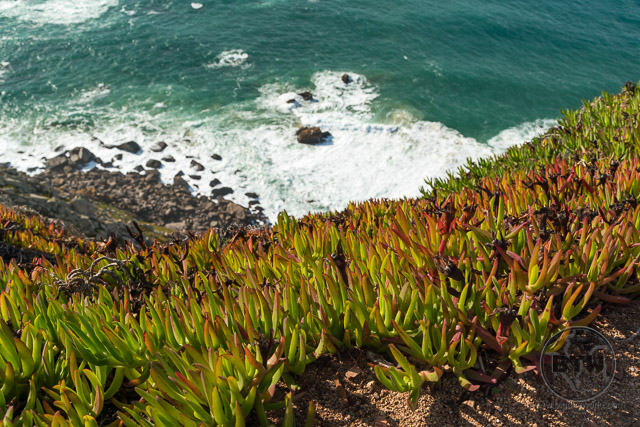 Cabo da Roca Portugal Succulents on the Sea
