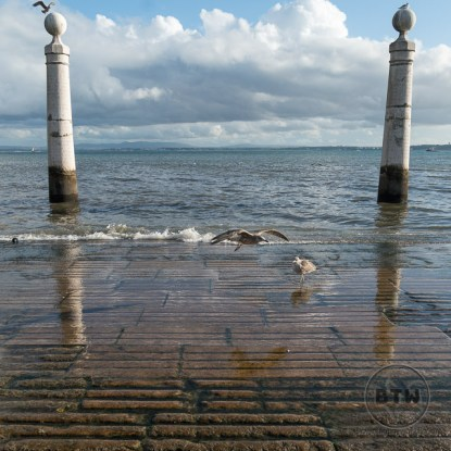 Seagulls at a pier on the Lisbon waterfront in Portugal