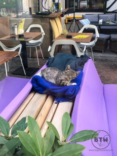 A tabby sleeping on folded blankets at a restaurant's outdoor patio in Bucharest, Romania