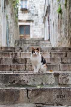 A calico cat sitting on stone steps in Dubrovnik, Croatia