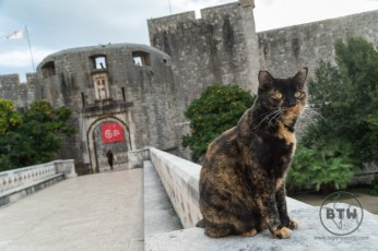 A tortoiseshell cat sitting on a wall outside of the walls of Dubrovnik, Croatia