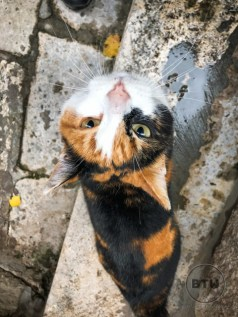 An upside-down calico cat looking up at the camera in Dubrovnik, Croatia