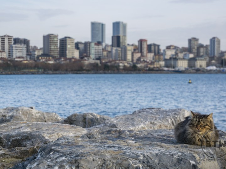 A longhair tabby resting on rocks in front of the city skyline of Istanbul