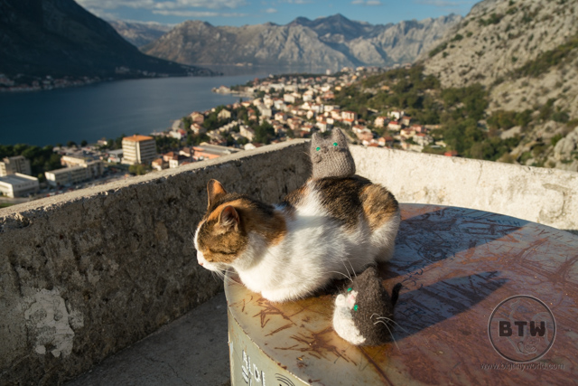 A tabby and white cat sitting at an overlook in Kotor, Montenegro with our travel kitties