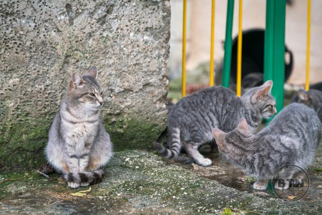 Cats on the western hill in Split, Croatia