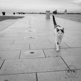 A cat at the waterfront Sea Organ in Zadar, Croatia