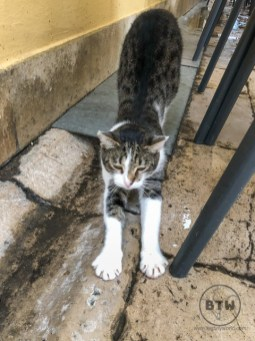 A tabby and white cat stretching in the streets of Zadar, Croatia