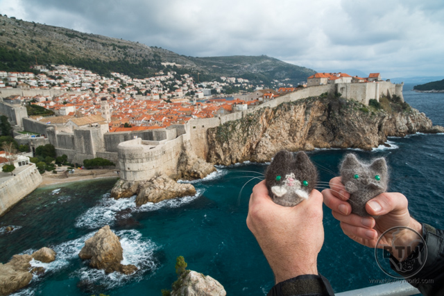 The travel kitties looking down at Dubrovnik, Croatia from the fortress