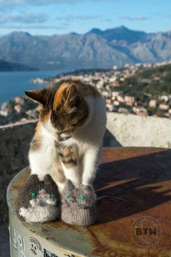 A cat sniffing at the travel kitties at the Kotor fortress ruins in Montenegro
