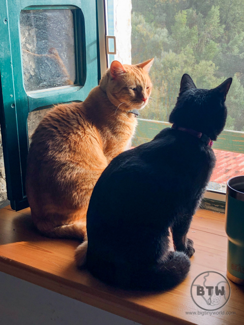 An orange tabby, Captain Ahab, and a black cat, Blackie, at a catsit in Montenegro