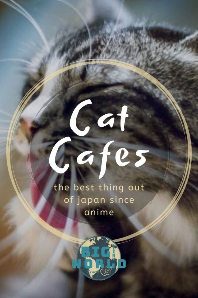 Cat Cafes: The Best Thing Out of Japan Since Anime | Japan is known for their cat cafes, so we couldn't visit without visiting a couple. Since, we've frequented cat cafes all around the world! Read all about them here! | BIG tiny World Travel | #bigtinyworld #catcafes #japancats #travel #traveljapan