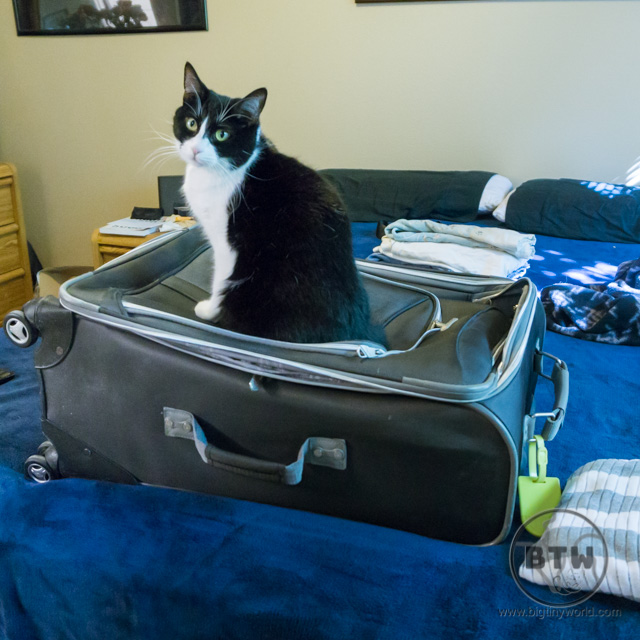 Our cat, Mochi, sitting on top of our suitcase | BIG tiny World Travel