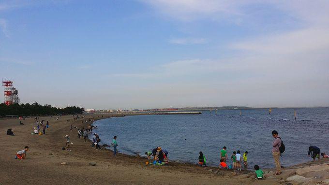 城南島海浜公園 つばさ浜の全容