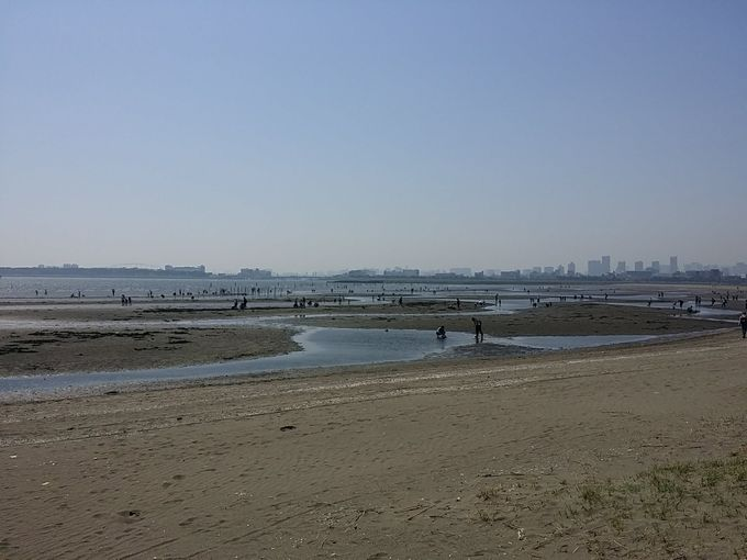葛西臨海公園の潮干狩り場(西側)