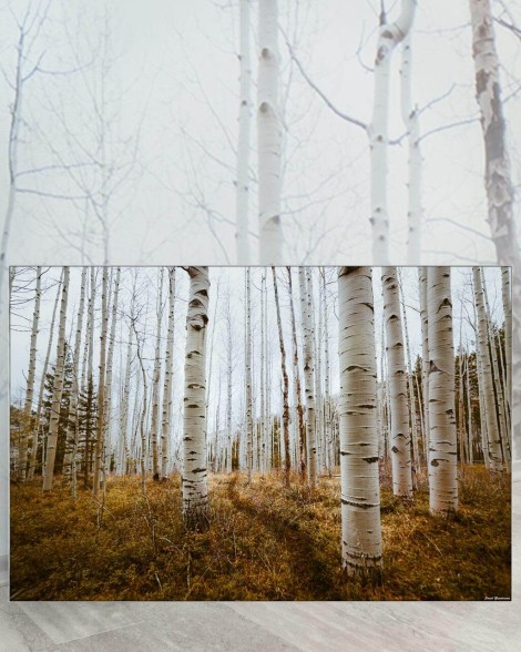 Big Biggest Massive Huge Large Largest Giant Gigantic Wall Décor Art Backlit Fabric Home Deco Artwork Artist Jared Gunderson Landscape Scenic Photography Instagram Forest Birch Trees