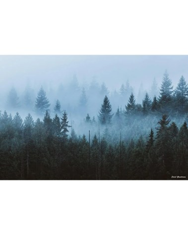 Large Squamish Trail Wall Art Nature Photography Jared Gunderson