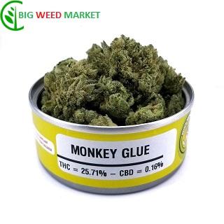 Monkey Glue