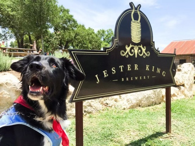 dog friendly restaurants austin-1