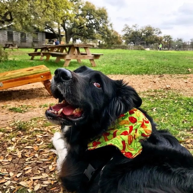 35 Dog-Friendly Bars and Restaurants in Austin, Texas