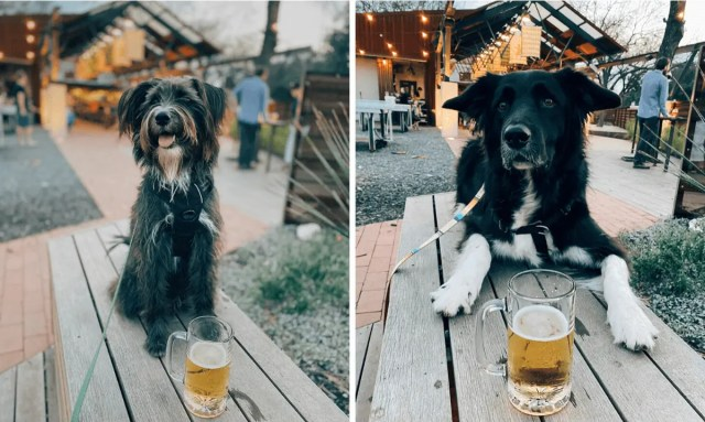 dog-friendly-places-in-austin-2020