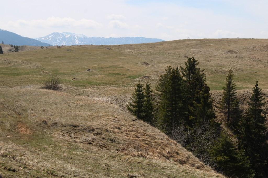 Купрешский пейзаж. Фото: Елена Арсениевич, CC BY-SA 3.0