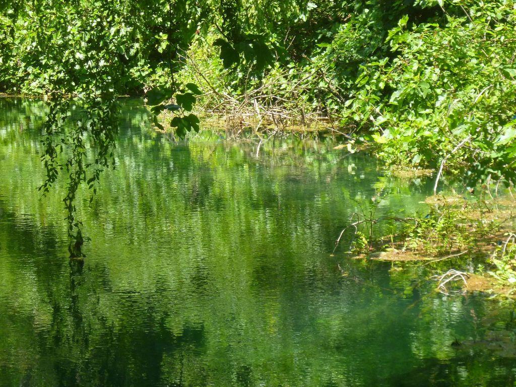 Зелёный мир. Фото: Елена Арсениевич, CC BY-SA 3.0