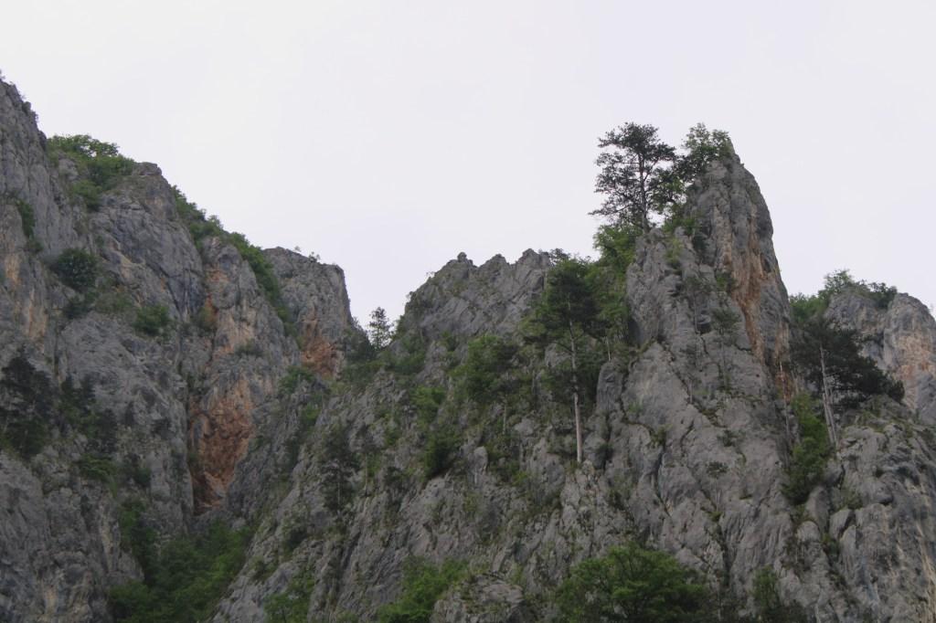 И на камнях растут деревья. Фото: Елена Арсениевич, CC BY-SA 3.0