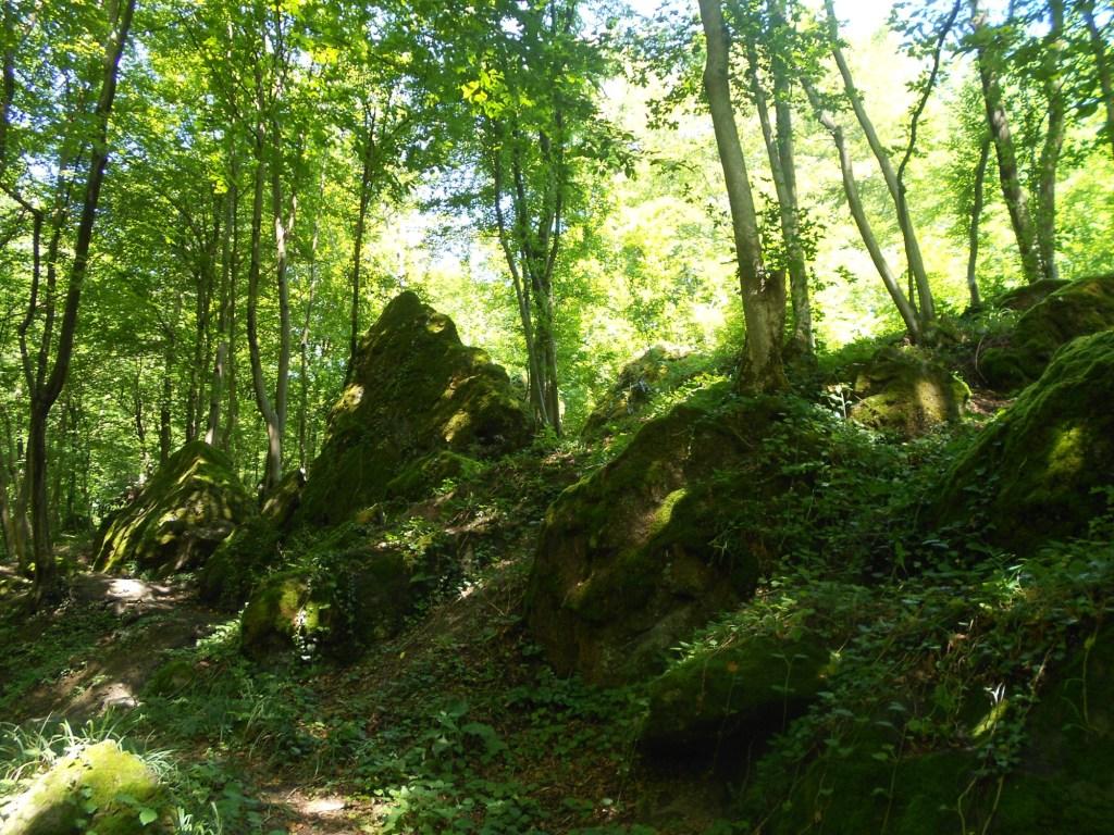 Лес, где найден шар. Фото: Елена Арсениевич, CC BY-SA 3.0