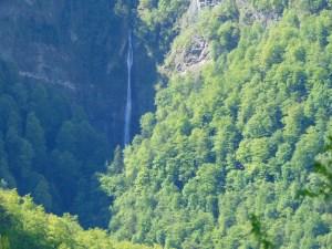 Водопад в реликтовом лесу. Фото: Елена Арсениевич, CC BY-SA 3.0