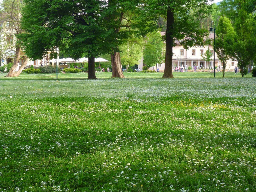 Лужайки парка Илиджи. Фото: Елена Арсениевич, CC BY-SA 3.0