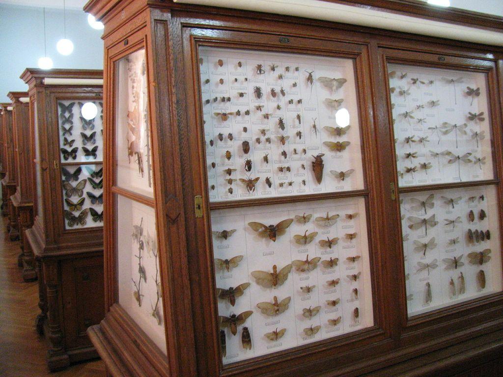 Коллекция насекомых. BiHVolim, CC-BY-SA-4.0