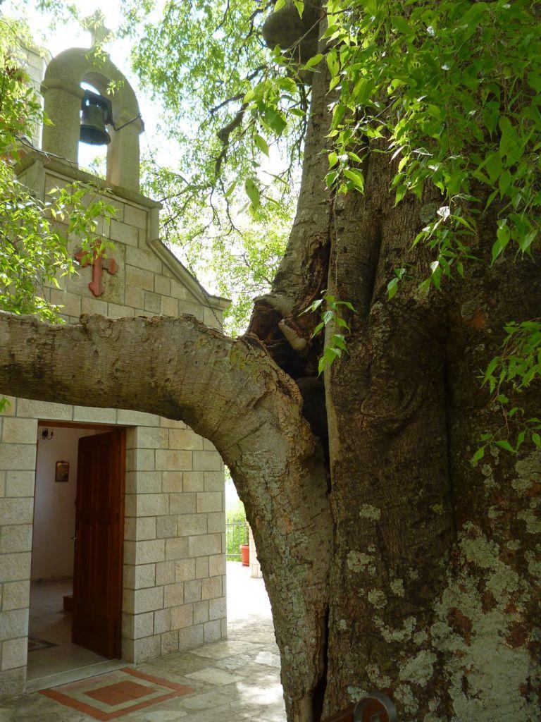 Старая кошчела у церкви. Фото: Елена Арсениевич, CC BY-SA 3.0