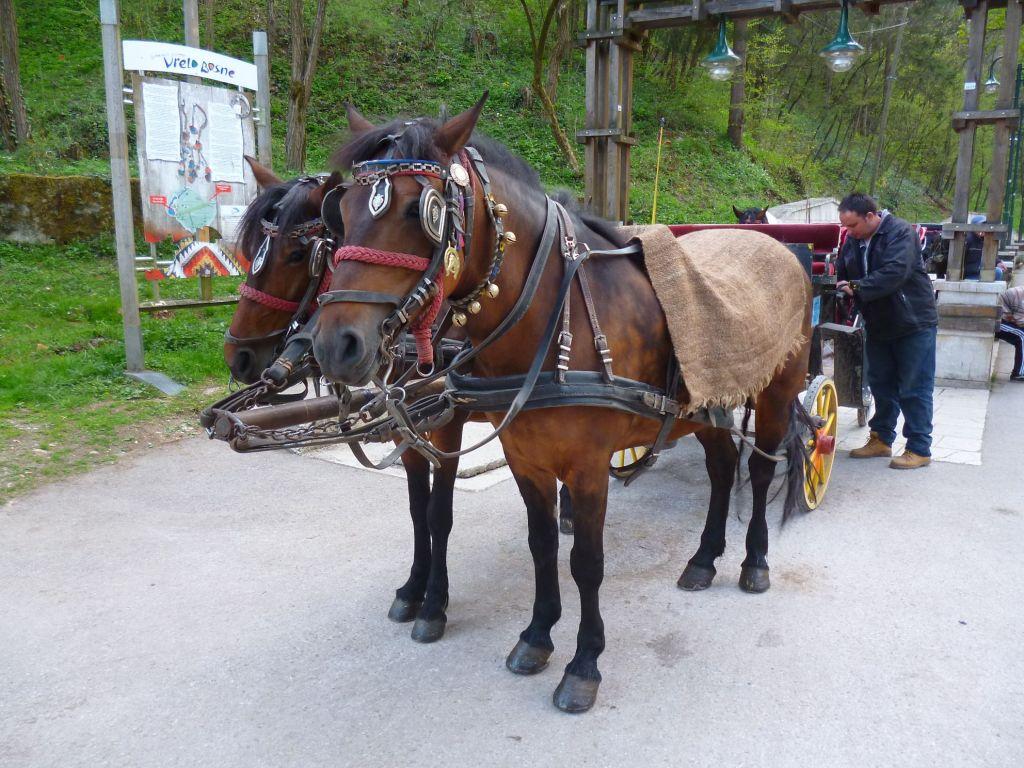 Фиакры и лошадки. Фото: Елена Арсениевич, CC BY-SA 3.0