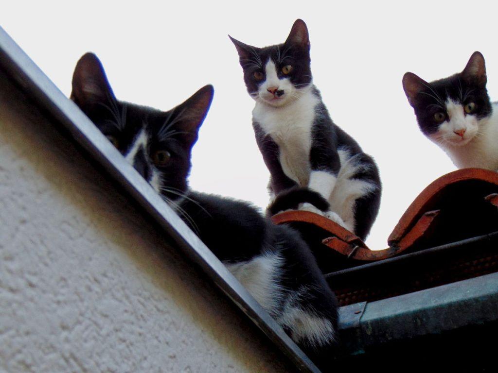 Кто тут у нас бедный котик? Фото: Елена Арсениевич, CC BY-SA 3.0