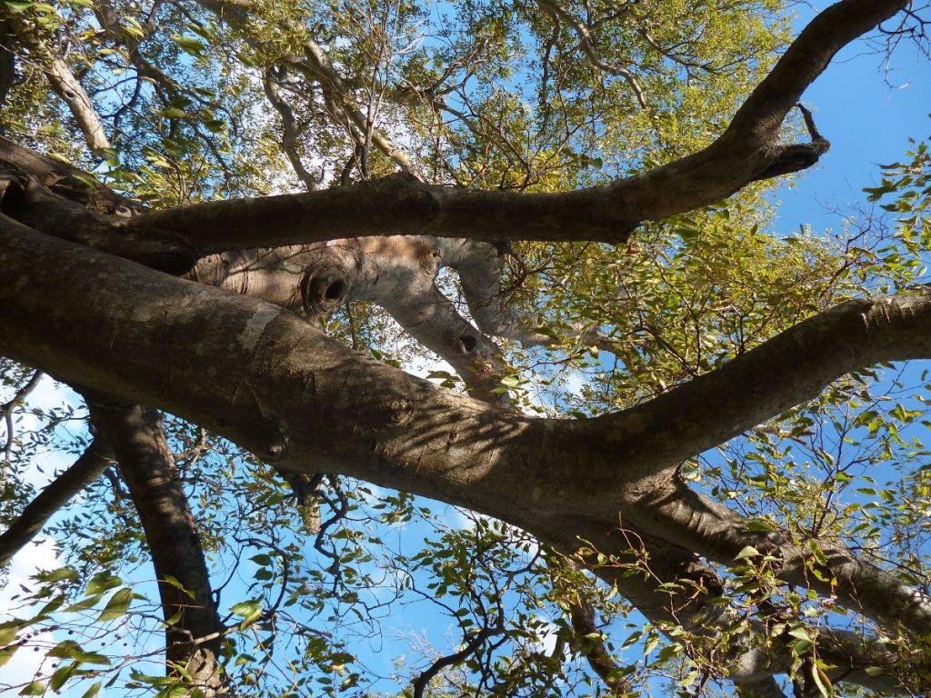 Ветви каркаса. Фото: Елена Арсениевич, CC BY-SA 3.0