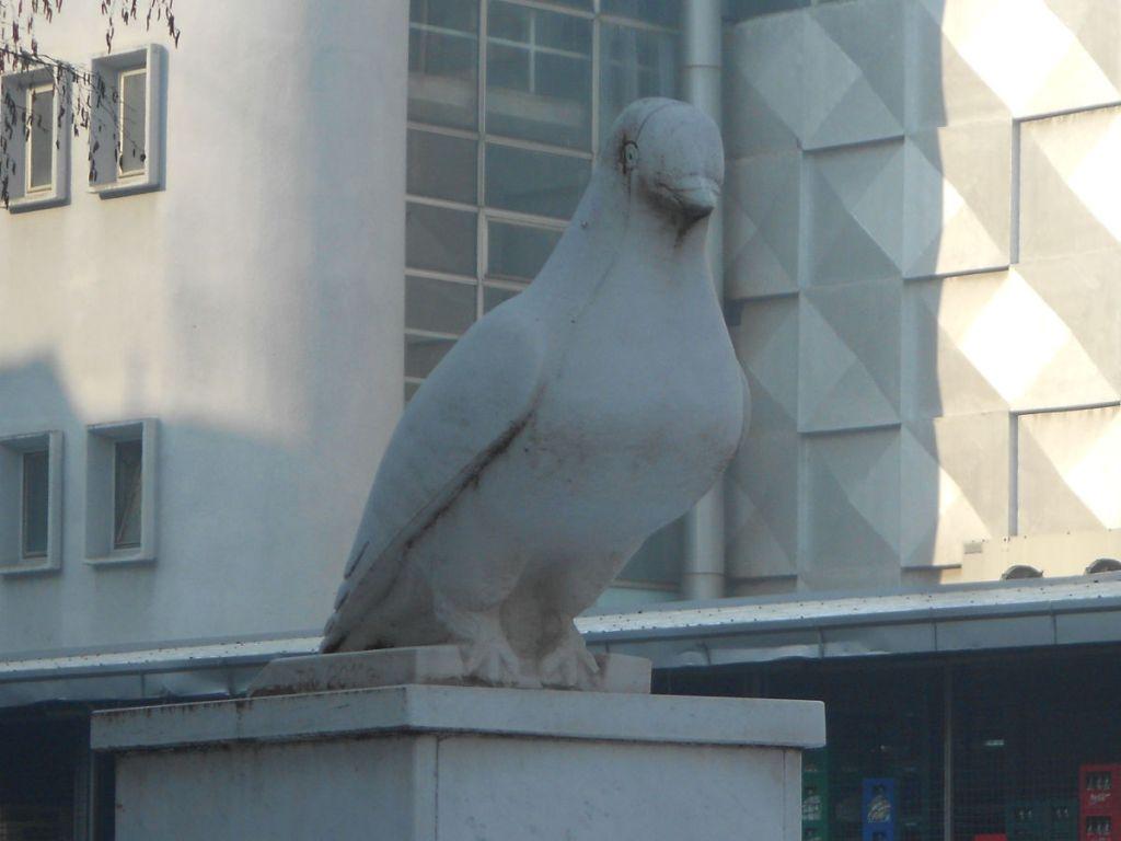 Травничский короткоклювый голубь. Фото: Елена Арсениевич, CC BY-SA 3.0