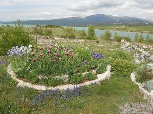 Ирисовый сад. Фото: Елена Арсениевич, CC BY-SA 3.0