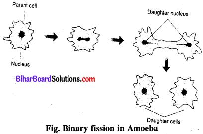 Bihar Board 12th Biology Model Question Paper 1 in English Medium 1