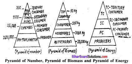 Bihar Board 12th Biology Model Question Paper 3 in English Medium 1