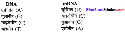 Bihar Board 12th Biology Model Question Paper 3 in Hindi 2